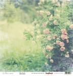 In Bloom Collection - Rose Garden